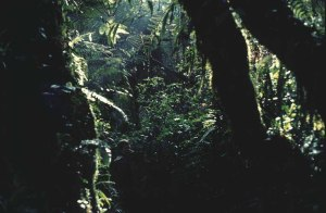 West Mau mountain rain forest, Kenya. Rain forests are important carbon sinks. Photo: Å. Bjørke