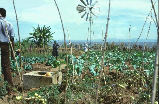 Small scale vegetable farming irrigated by Lake Victoria water. Homa Hills Centre, Kenya. (Photo: Å. Bjørke)