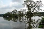 Floods 2011 Anurapdaphura
