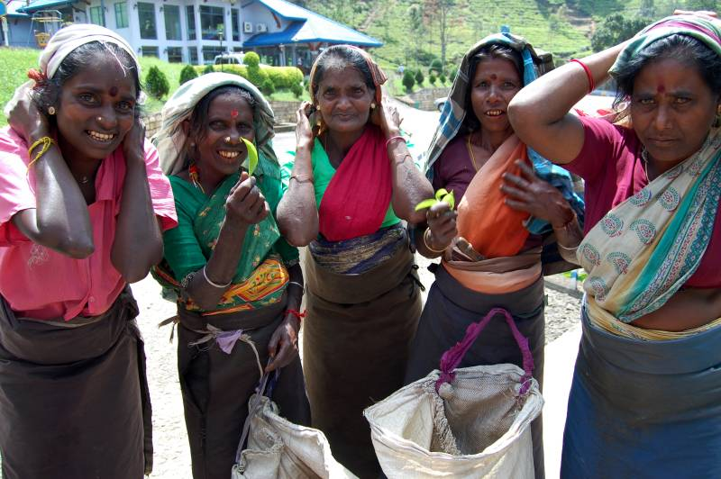 tea pickers - Nuwara Eliya