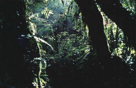 West Mau rain forest, Kenya