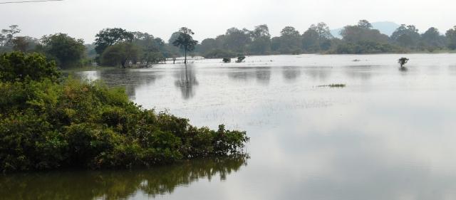 Floods at Anuradaphura, Sri Lanka 2011 (Photo: Å. Bjørke)