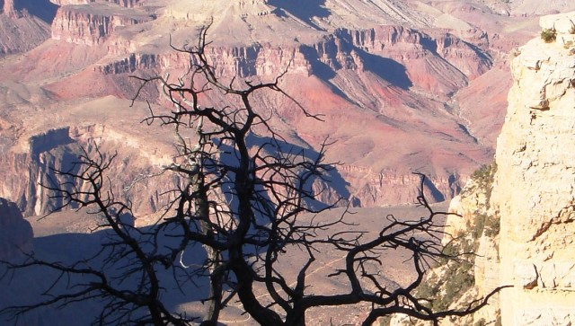 Grand Canyon (USA) is getting drier (Photo: Å. Bjørke)
