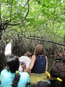 Mangrove forests need protection. Sri Lanka. Photo: Å. Bjørke
