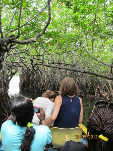 Mangrove forests need protection. Sri Lanka. Photo: Å. Bjørke
