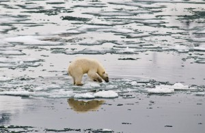 Polar bear on melting sea ice. Photo: Peter Prokosch, GRID-Arendal