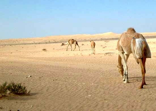 Drier and warmer in the Middle East. Sinai. (Photo: Mohammed T. Ahmed)